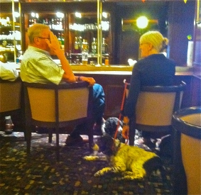 liege dogs in bar